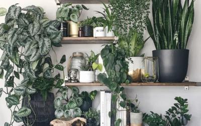 The Secret Life of House Plants